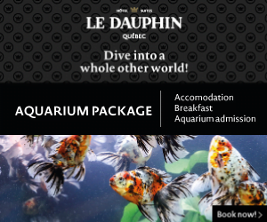 Dauphin aquarium english